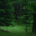 グリーン、深い森、自然との共存 魂の本質