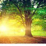 「静寂」の中で自分を取り戻す そして得られる喜びと至福