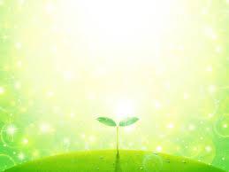 キラキラの新芽