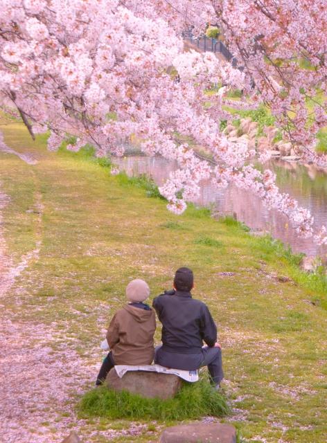 老夫婦と桜